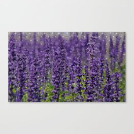 Lavender Love Canvas Print