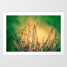 Calluna Art Print