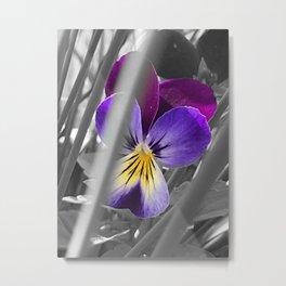 """Hidden"" Viola Metal Print"
