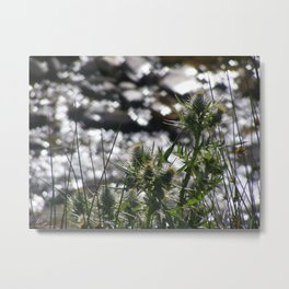 Spring Thistles Metal Print