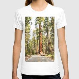 sequoia tree T-shirt