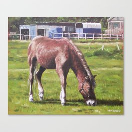 Brown Horse by Stables Canvas Print