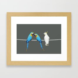 Macaw - Kakadu sitting on rope Framed Art Print