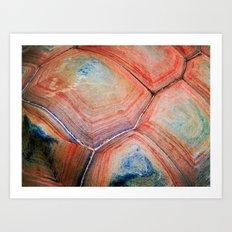 Shell Topography Art Print