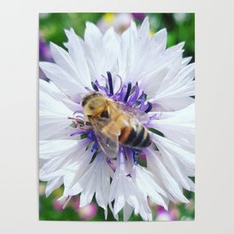 Blessed Bee Poster