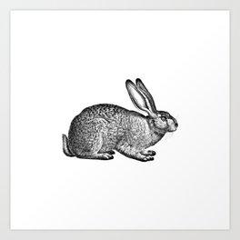 Rabbit Hare Art Print
