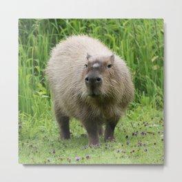 So cute capybara Metal Print