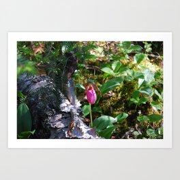 Pink Lady Slipper Art Print