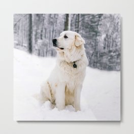 White Dog In The Snow Metal Print