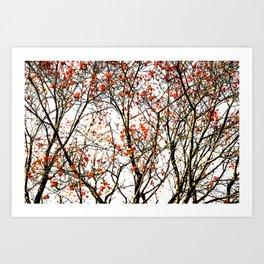 Red rowan fruits or ash berries Art Print