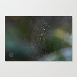 Spiders II Canvas Print