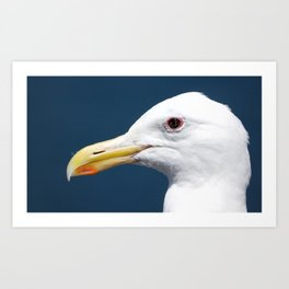 Seagull Portrait2 Art Print