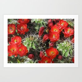 Claretcup Cactus Art Print