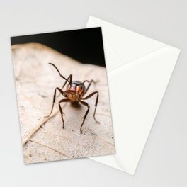 Ant On A Leaf Stationery Cards
