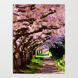 trees and blossoms Poster