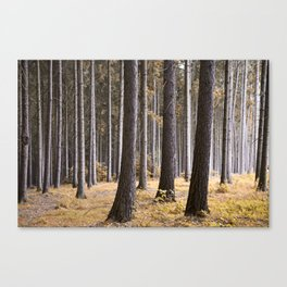 Into the pine forest we went Canvas Print