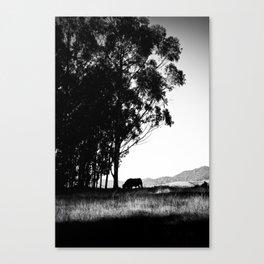 Cow Silhouette  Canvas Print
