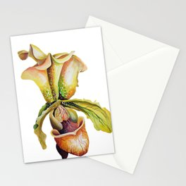 Paphiopedilum, Slipper Orchid Art, Venus Lady Slipper, Exotic Tropical Orchid Stationery Cards