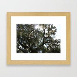 Sunlight Through The Oak 3 Framed Art Print