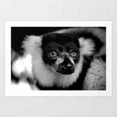 Curious Lemur Art Print