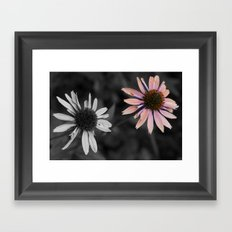 Coneflower Framed Art Print