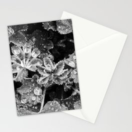 Lady's Mantle Stationery Cards
