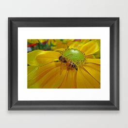Honey Bee and Dahlia Framed Art Print