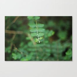 Botanical Canvas Print