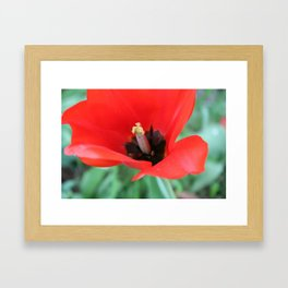 There's Nothing Like A Spring Stilletto  Framed Art Print