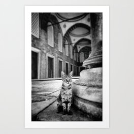Mosque Cat Art Print