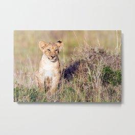 Young lion Metal Print