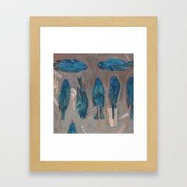 Indigo Buntings Bird Specimens Framed Art Print