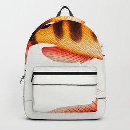 Marcus Elieser Bloch - Streaked Grunt Backpack