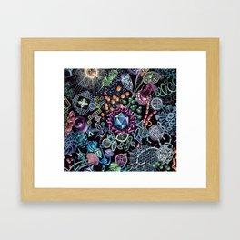 Marine Microorganims Framed Art Print