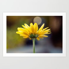 Yellow Gerber Daisy Art Print