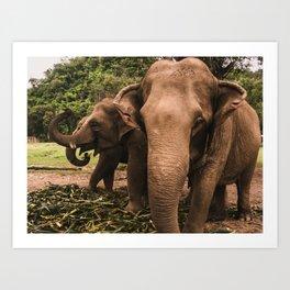 elephant nature park 2 Art Print