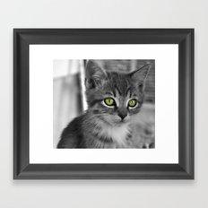 Through the eyes of a kitten Framed Art Print