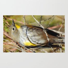 Yellow Rumped Warbler Rug