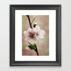 Pink Peach Blossoms Framed Art Print