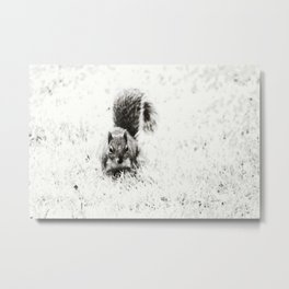 Foraging Squirrel Metal Print