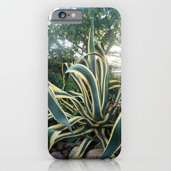 Agave americana 'Variegata' iPhone & iPod Case