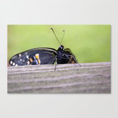 Clinging On Canvas Print
