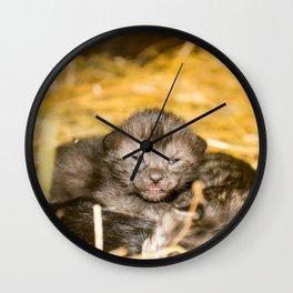 New Born Kittens Wall Clock