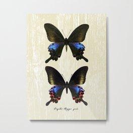 Butterfly11_Papilio Hoppo pair Metal Print