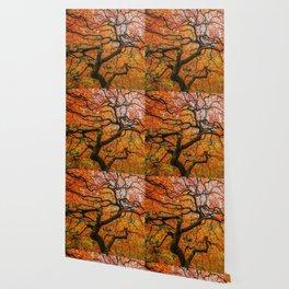 Japanese Maple Wallpaper