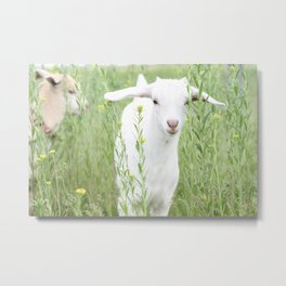 Shy Baby Goat Metal Print
