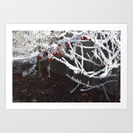 Frost Spiked Crabapple Tree Art Print