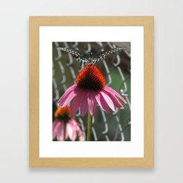 Open Wings Framed Art Print
