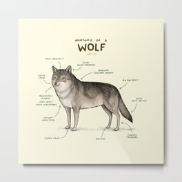Anatomy of a Wolf Metal Print