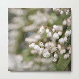 Vintage Inspired Beauty Bush Blossoms Metal Print